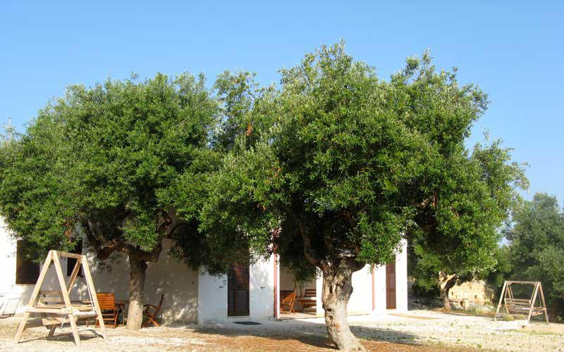 Affitto in Salento a Pescoluse, vista esterna dei bilocali